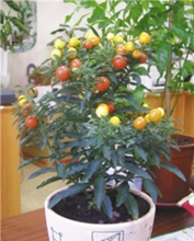 Осторожно ядовитые растения